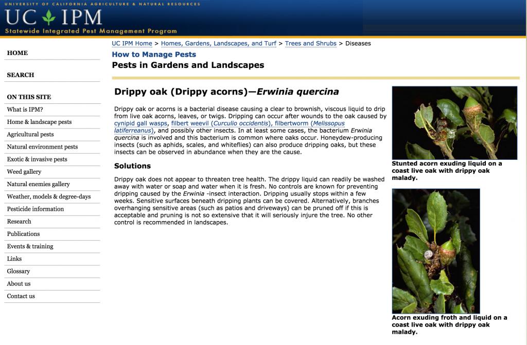 http://www.ipm.ucdavis.edu/PMG/GARDEN/PLANTS/DISEASES/dripoakacorns.html