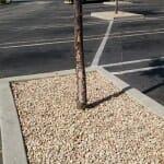 Sunburn on south side of parking lot tree