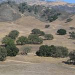 California Green!